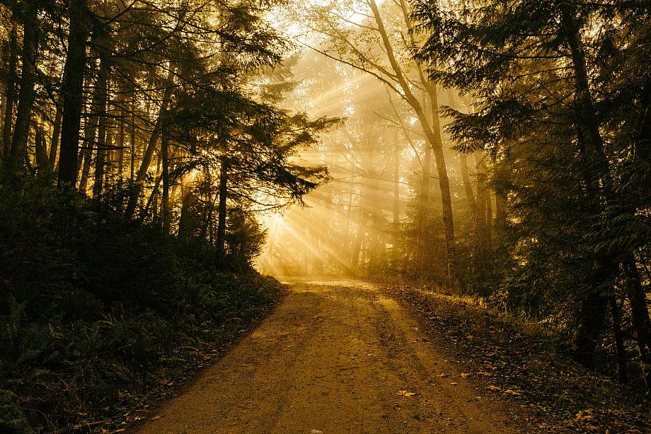 Ein Waldweg wird von Sonnenstrahlen getroffen, die durch die Bäume scheinen.