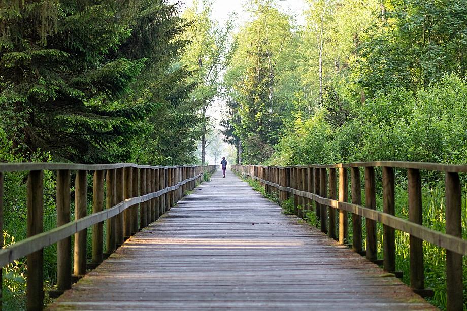 Person joggt auf einer großen Brücke inmitten von Bäumen